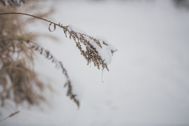 delicate snow on dried grass