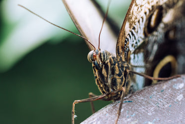 detailed close up of moth