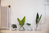 different plant leaves sit in glass jars