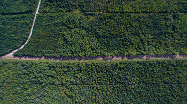 dirt road runds through green trees drone