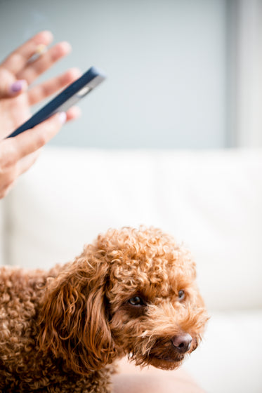 dog and hands holding cell phone