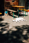 dog lounging on a sunlit street