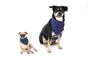 Picture of Dogs Wearing Bandanas - Free Stock Photo