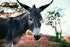 Free Donkey On Beach Image: Browse 1000s of Pics