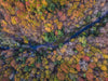drone photography of river through fall trees