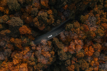 drone view of car driving through forest
