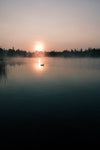 duck and setting sun