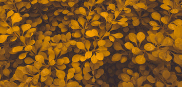 dusty orange and brown leaves in autumn
