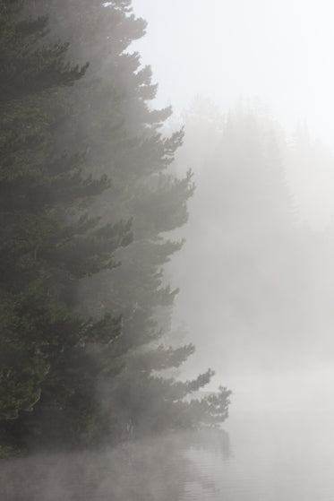 ever green woods in fog