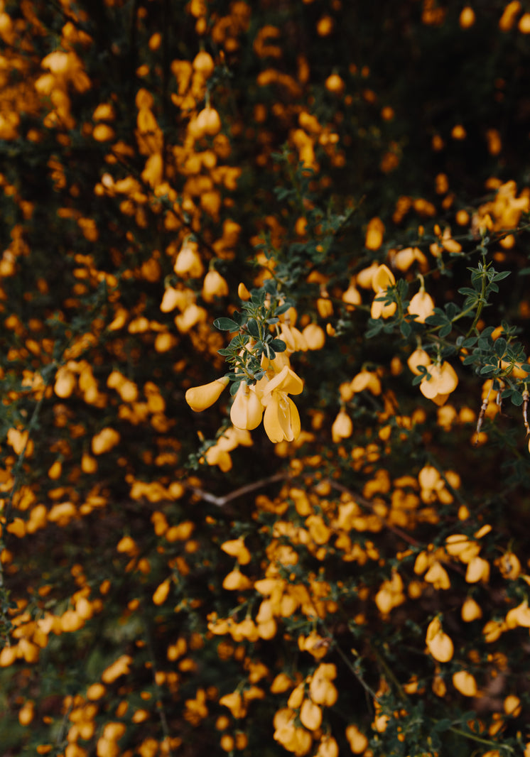 Every Gorse Has Its Thorn