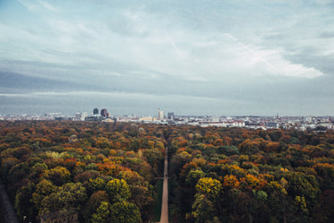 fall forest and city view