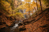 fall forest and waterfall