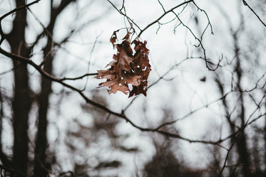 fall leaves hanging from branch