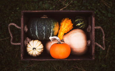 fall vegetable box