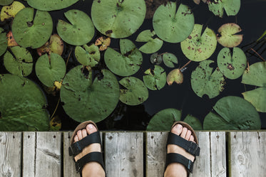 Browse Free HD Images of Feet On Dock Above Lily Pads
