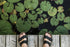 feet on dock above lily pads
