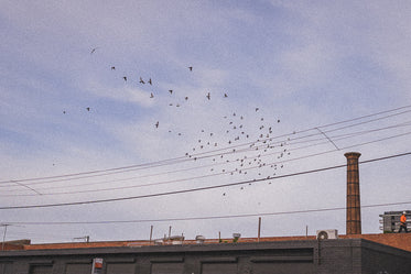 film grain and flock of birds