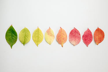 flat lay of autumn leaves changing color