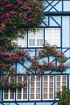 floral vines on house