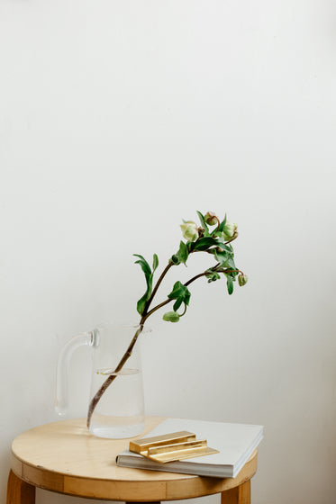 flower buds on a branch sit in a jug of water