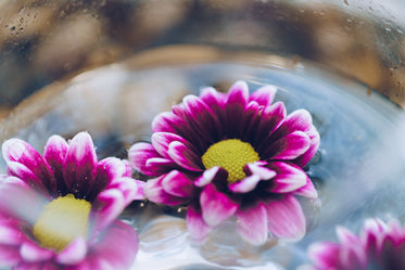 flowers in water close up
