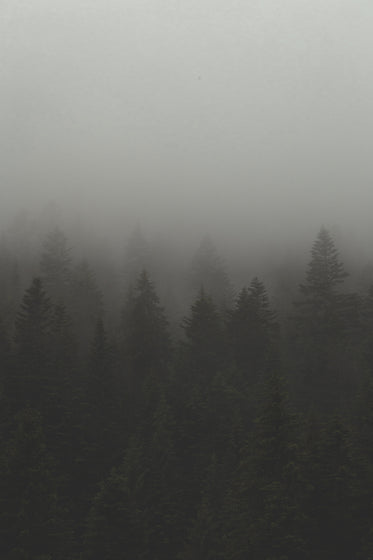 fog and mist over forest trees