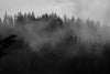 fog rolling over shadowy forest