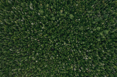 forest as far as the eye can see