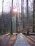 forest boardwalk path at sunset