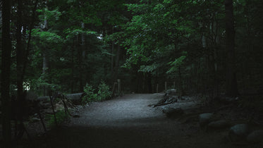 forest path at night