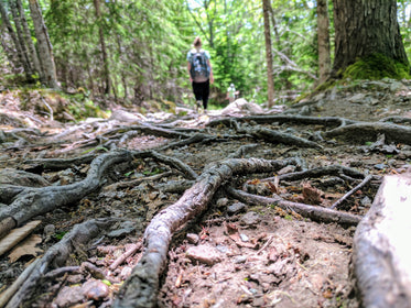 forest tree roots on path