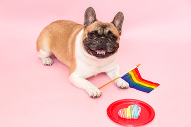 french bulldog pride