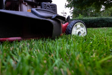fresh cut grass and mower