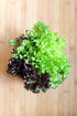 fresh green and purple fancy lettuce