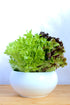 fresh lettuce greens in bowl