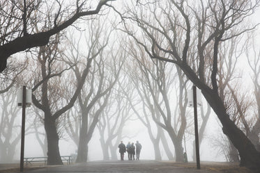 Browse Free HD Images of Friends Walk Foggy Path