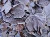 frosty fall leaves on ground