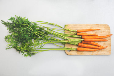 Picture of Garden Carrots — Free Stock Photo