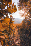 golden fall walkway leading to hills