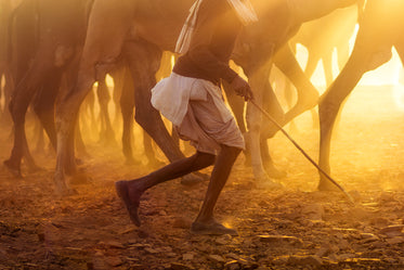 golden light bathes a person and animals
