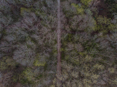 Browse Free HD Images of Gravel Path Goes Through The Middle Of A Forrest