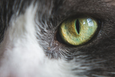 Picture of Green Cat Eye - Free Stock Photo