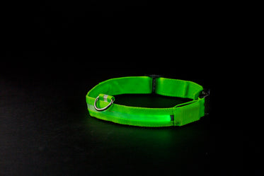 green glowing dog collar