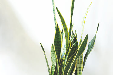 green house plant leaves