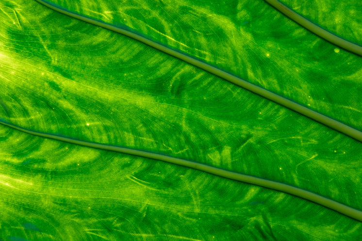 Green Leaf Close Up Glowing In Light