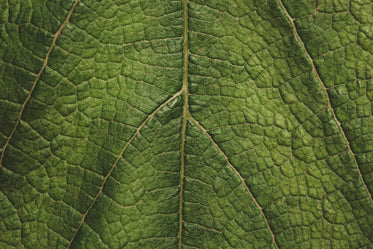 green leaf texture close up