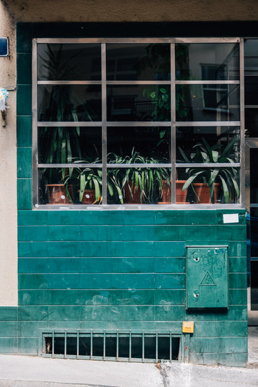 green tiled building with plants in the window frame