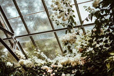 greenhouse blossoms