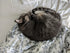 grey cat curled up and sleeping
