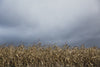 grey storm clouds over dry farm field